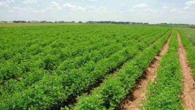 Photo of لجنة الزراعة النيابية تناشد رئاسة الوزراء اصدار قرار بشراء التمور