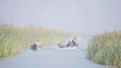 Photo of وزارة الزراعة تطلق ملايين  اليرقات السابحة من اسماك الكارب في الأهوار والمسطحات المائية