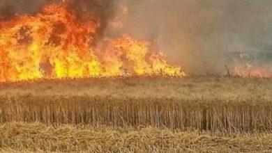 Photo of الدفاع المدني: تكشف تفاصيل حوادث حرق المحاصيل