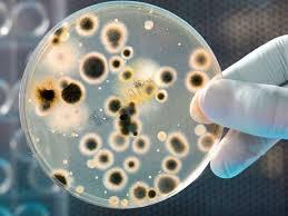 Photo of هل سمعت بالبكتريا الاكلة للحوم البشر؟.. ظهور مقلق في امريكا