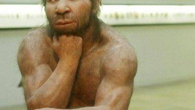 """Photo of دراسة: مرض شائع وراء إنقراض إنسان """"نياندرتال"""""""