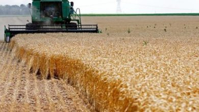 Photo of سلام الشمري يعلن عن فرصة استثمارية لزراعة مليون دونم في عدد من المحافظات