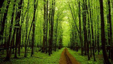Photo of ما عدد الأشجار الموجودة على الأرض؟
