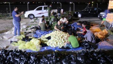 Photo of الحشد الشعبي يوزع ٥٠٠ سلة غذائية بين الفقراء في البصرة