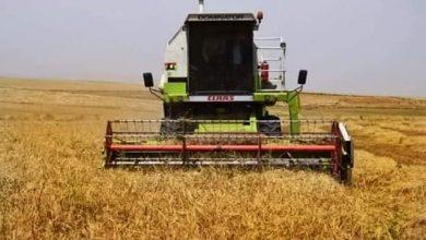 Photo of انطلاق عملية حصاد ٦ مليون دونم مزروعة بمحصولي  الحنطة و الشعير  في محافظة نينوى الحبيبة