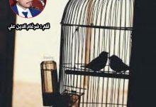 Photo of البلبلُ الحزين ..