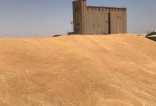 Photo of التجارة : تعلن انجاز صكوك مستحقات مسوقي الحنطة المحلية لموسم 2020