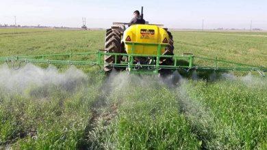 Photo of زراعة بغداد الرصافة تؤكد وضع خطة مقترحة لزراعة أكثر من 100 ألف دونم بالمحاصيل الشتوية
