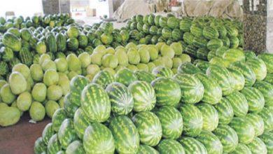 Photo of وزارة الزراعة تسمح بأستيراد  محصولي الرقي والبطيخ