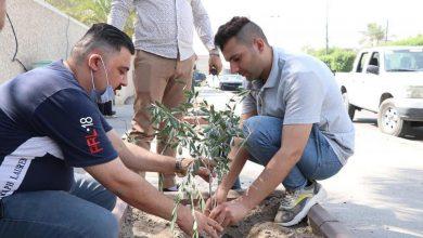 Photo of امانة بغداد تزرع الآلاف من اشجار الزيتون بالتعاون مع منظمات المجتمع المدني