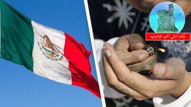 Photo of رسمياً:  المكسيك توافق بخطوة تاريخية، بتعاطي وتجارة وتصدير الحشيش والماريجوانا في جميع أنحاء البلاد