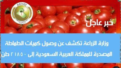 Photo of وزارة الزراعة تكشف عن وصول الكميات المصدرة من الطماطة إلى المملكة العربية السعودية ووصولها إلى ٢١٨٥٠ طن